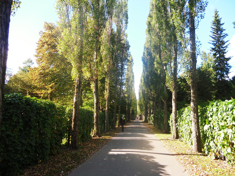 Taman dekat hostel