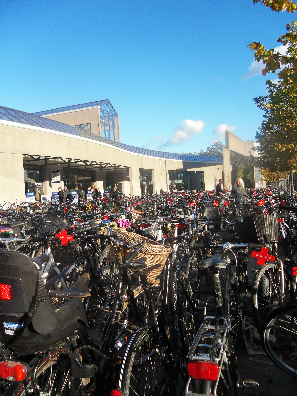 Kota seribu sepeda