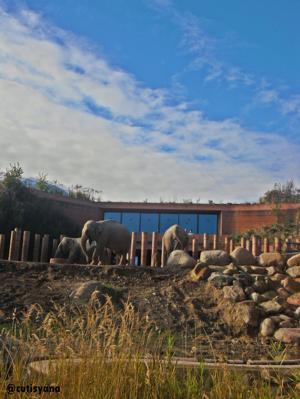 Gajah-gajah di Frederiksberg Have